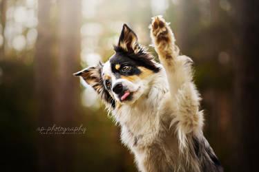 High five! by Wolfskuss