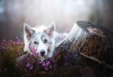 White Fox by Wolfskuss