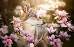 Chinua by Wolfskuss