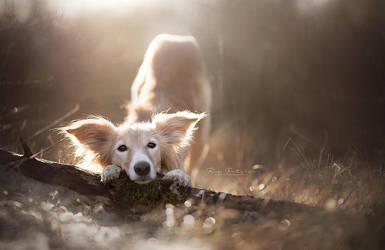 Faye by Wolfskuss