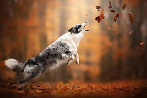 Enjoying Autumn by Wolfskuss