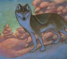 Blue Wolf Study by Rowkey