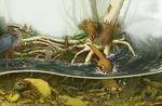 ODNR: WildOhio Spread 3 of 10 by Rowkey