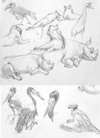 Zoo Studies: July'16 by Rowkey