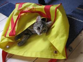 my cat by Ayi82