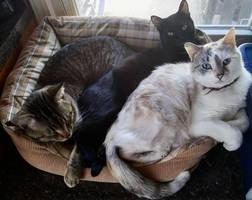 Kitty Cat Cuddles by MaryJane66613