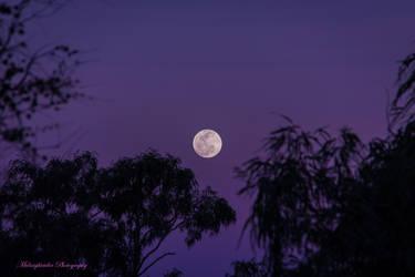 Romance under the Moon by midnightrider79