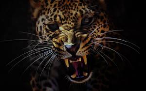 Leopard by ZloyKritik