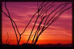 Arizona Sunset 2 by JCCJ756