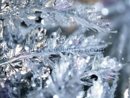 Winter by Krzik