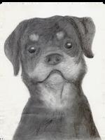 Rottweiler by MartAnimE