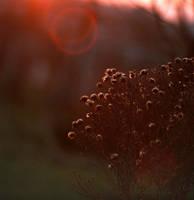 warmer.. by agnieszkakryspin