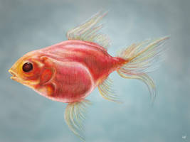 Fish by Berilia