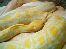 Snake by AnknaraSkysurfer