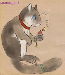Grey Douglas Squirrel by ShamuHydri