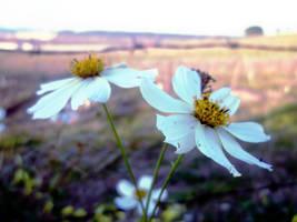 Wild Flower by DyannaC