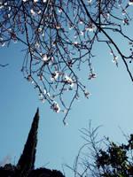 Spring Sky by DyannaC