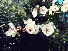 Petit White Flowers by DyannaC