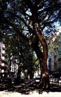 A Street in Lisbon by DyannaC
