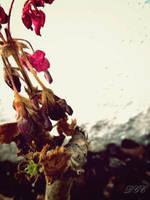 Dying Beauty by DyannaC