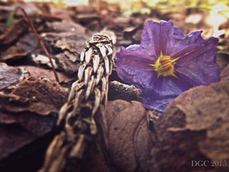 Autumn's Fallen Flower by DyannaC