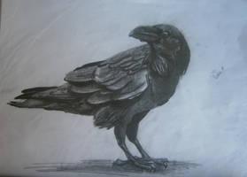 raven by AveOko