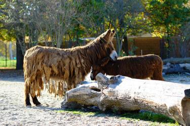 Donkey by LEElya
