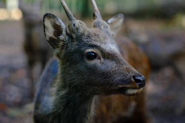 Deer by LEElya