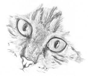 Jacky's kitty face by Loony-Madness