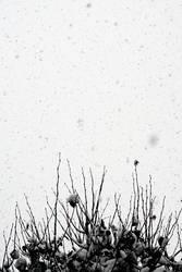 Snow on grey skies by Aeoliane