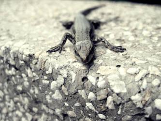 .Lizard. by OreGaOmaeOMamoru