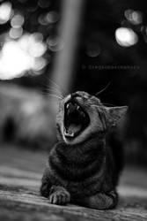 Yawning by OreGaOmaeOMamoru