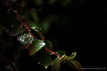 Drops by FabianFynn