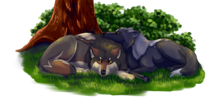 In the Shade by Wildfire-Tama