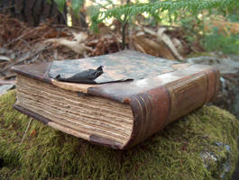 Book in Woods 5 by DaemStock