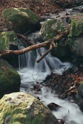 A stream by TeddyMarkov