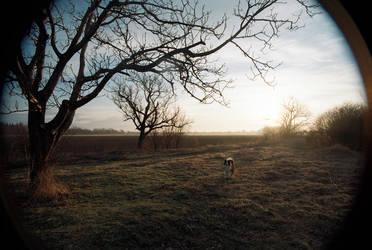 Morning Orion by TeddyMarkov