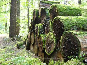 Forgotten Logs I by SepticSkeptik