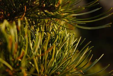 Tree part by Filon-kun