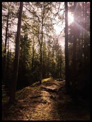 Deep in the woods by Watizit