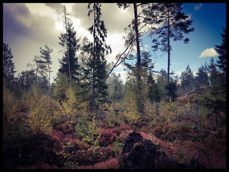 Forest2 by Watizit