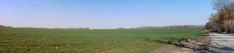 field by OkamIGrey