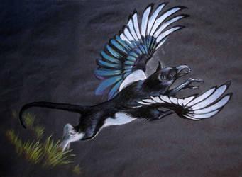 Magpie Griffin by jmsanford
