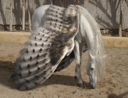 The Pegasus by BajiStock