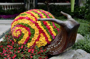Garden Snail by pdelariva