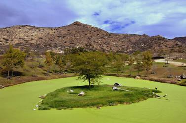 Desert Green by pdelariva