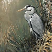 Grey heron by Renum63