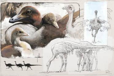 Struthiomimus sp. by Renum63