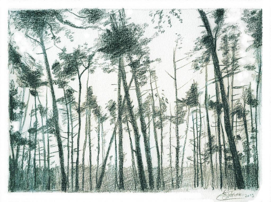 Pines by SaskiaDeKorte