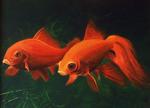 Goldfish - acrylic painting by Giselle-M